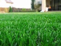 summer-green-lawn.jpg